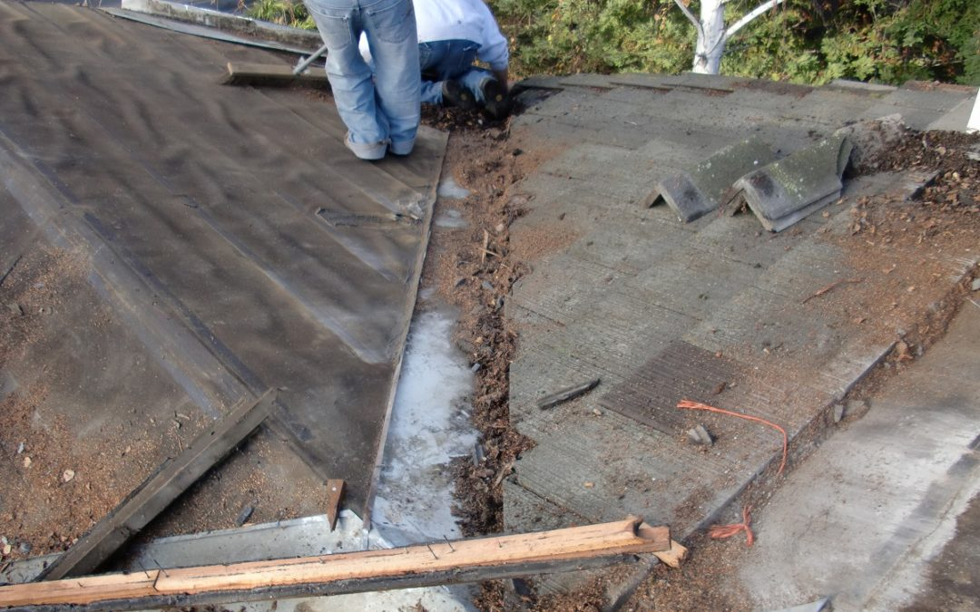 Tile Roof Repair & Maintenance Tips in Alamo – 3 Benefits of Removing Overhanging Tree Branches